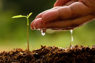 Seeding,Seedling,Male hand watering young tree